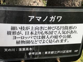 katuyama3.jpg