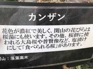 katuyama6.jpg
